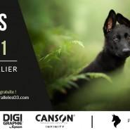 Concours Photo Univers Parallèles 2021 – Portrait Animalier